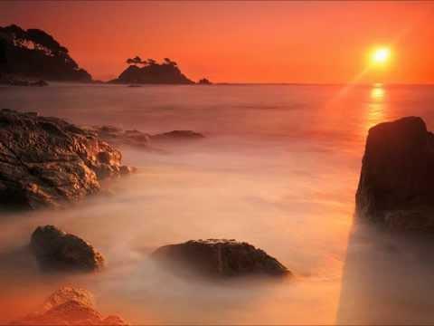 Arcturian Sunbird - Steve McDonald