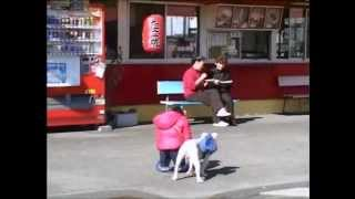 Phim hài Nhật Bản - Chó & Khỉ thông minh phần 1 - Tập 12 [HD]