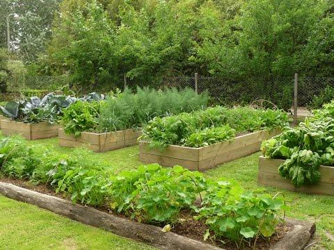 Como Implementar Una Huerta Casera - La Huerta Organica De Carlina - TvAgro Por Juan Gonzalo Angel