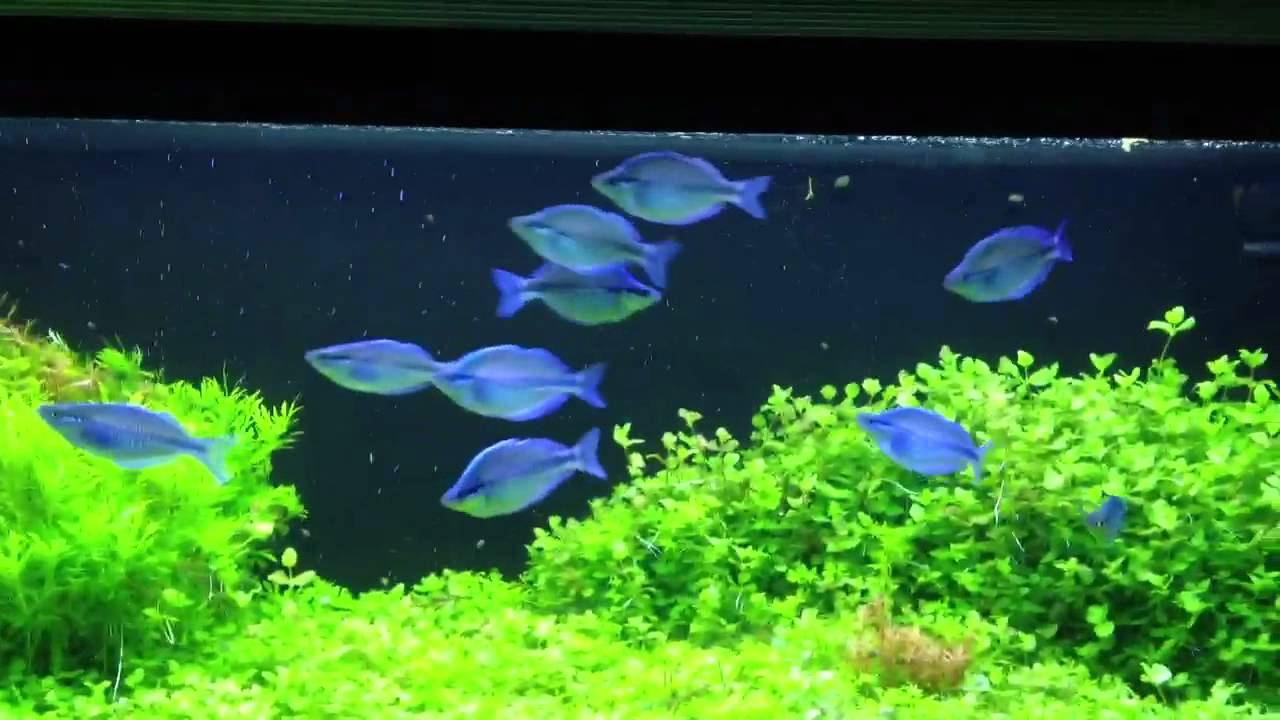 Kamaka Rainbowfish - YouTube