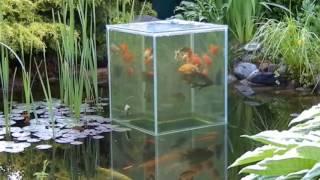 Oczko wodne akwarium ponad lustrem wody karmienie rybek