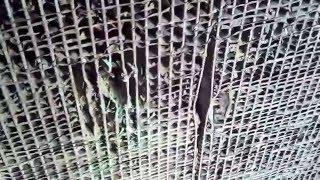 Ремонт радиатора охлаждения(, 2015-12-07T15:26:36.000Z)