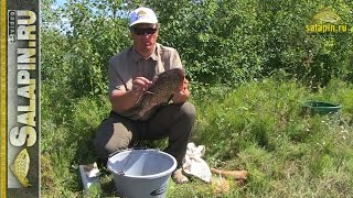 Как сохранить улов (крупную рыбу) в жару и довезти до дома [salapinru]