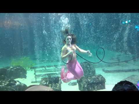 Mermaid at Adventure Aquarium - Camden, NJ