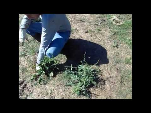 Organic Farming - Methods to Control Weeds