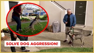 How to Solve D๐g Aggression! (Dog Nation)