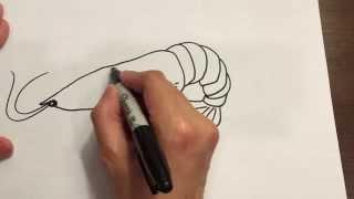 Draw A Shrimp
