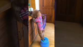 Dog escapes from cage and gets himself some trits! #short