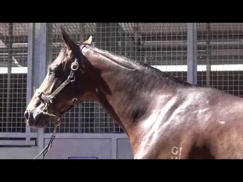 2017 Gold Coast Magic Millions Fastnet Rock x Zavana