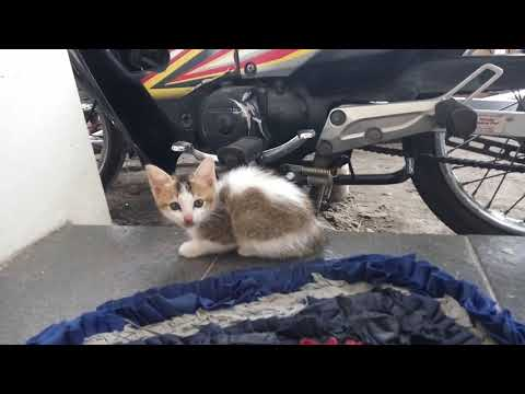 Cute Kittens Doing Funny Things 2020 - cutest cats - cute kittens meowing