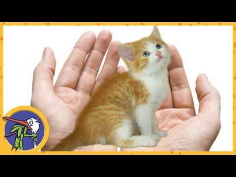 Отдаем котенка Мими в добрые руки