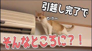 【新居】引越し完了で家具を設置したら猫がとんでもないところに…!