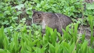 Самарские кошки - Cats from Samara, Russia - 7