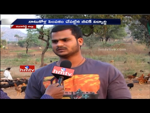 B Tech Student Vamshidhar Turns Into a Successful Farmer | 'Natu Kodi' Farming | HMTV