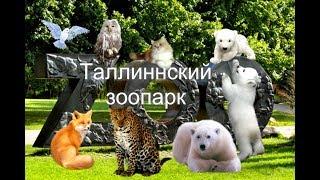 Таллиннский зоопарк.Сентябрь.2017 год.