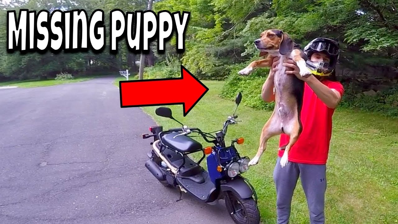 Download Found Missing Puppy (Alone and Thirsty) *HAPPY ENDING*
