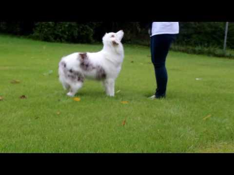 Deaf Dog Training: Stay