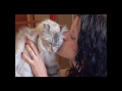 RagaMuffin Cats 101