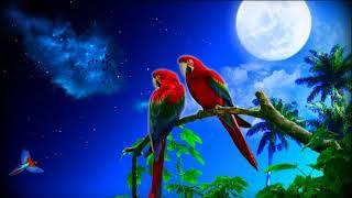 Аудио урок для вашей птицы! Научить говорить попугая.