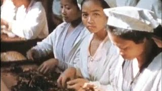A Cigarette Factory in Colonial Indonesia - Tempo Doeloe