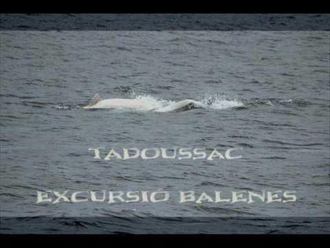 Canadà - Tadoussac - Balenes