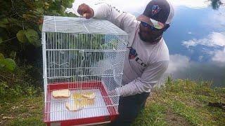 good rabbit cages