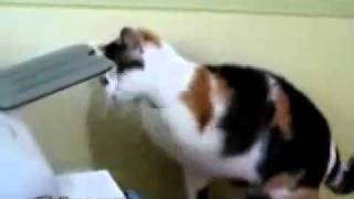 Gatos Locos Y Chistosos