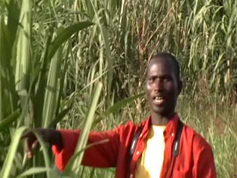 Acholi Pajok Sudan