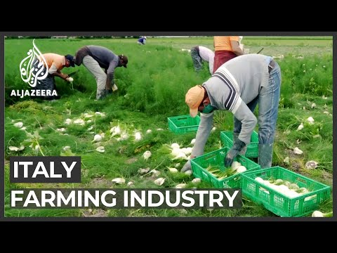 Italy's farmers strive to save businesses as pandemic bites