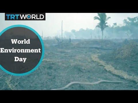 World Environment Day celebrates biodiversity
