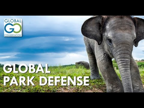 Global Conservation - Introduction
