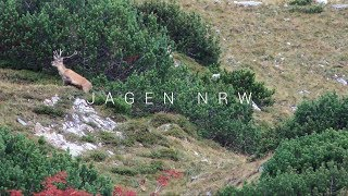 Red Deer Hunting in the Alps  Deer Rut on the Grossglockner  jagenNRW  with SUBTITLES