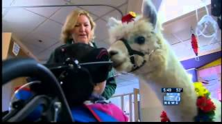 Therapy llama spreads cheer in Portland