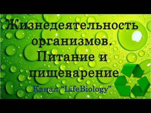 Химия — Википедия