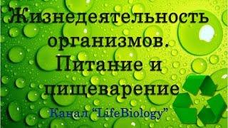 Жизнедеятельность организмов. Питание и пищеварение