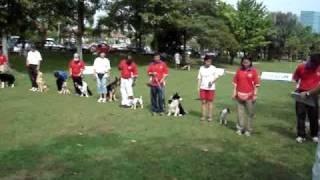Dog Obedience & Agility Training