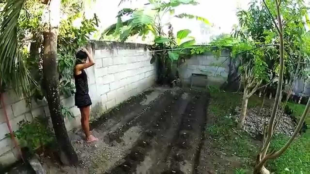 Our Philippine Backyard Garden Update   Philippines Expat   YouTube