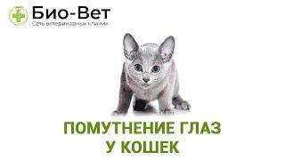 Помутнение глаз у кошек. Ветеринарная клиника Био-Вет.