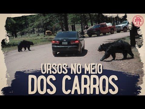 URSOS NO MEIO DOS CARROS NO ARIZONA