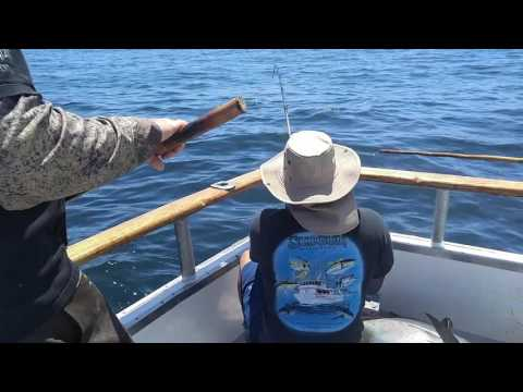 Huge Bluefin Tuna   Caught Off San Diego Coast
