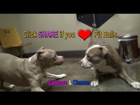 The Pit Bull Dance.   Please share.