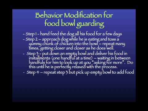 Behavior Modification in the Shelter: When and How