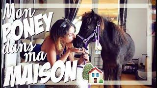 Mon poney dans ma maison !