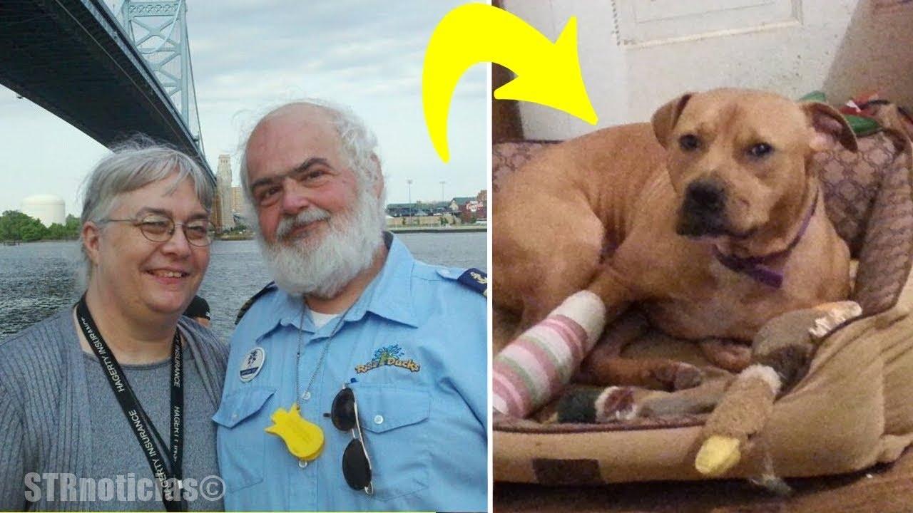 pareja-de-ancianos-adopta-al-pitbull-no-deseado-lo-que-el-perro-les-hizo-despus-nadie-lo-esperaba