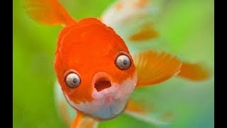 ULTIMATE CUTEST FISH COMPILATION 2018 - SO FUNNY!