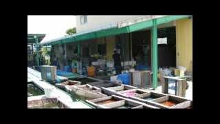Matsuri im Sommer in  Japan und die Geschichte des Goldfisches