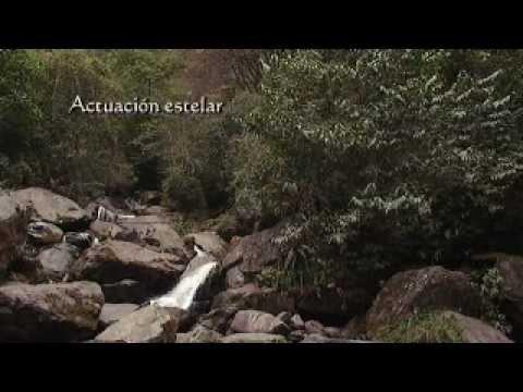 2012 Virgen de Copacabana - Trailer