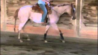 Principal Investment Quarter Horse