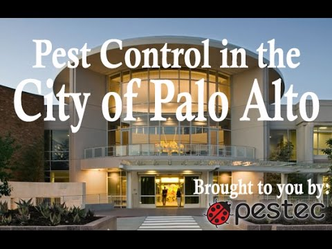 Pestec: City of Palo Alto