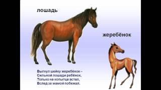 Презентация домашние животные и их детёныши презентация